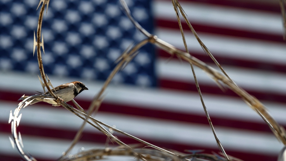 A sparrow sits on the razor wire of the Camp VI detention facility in Guantanamo Bay Naval Base, Cuba, on April 17, 2019. (Alex Brandon / AP)