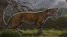 Simbakubwa kutokaafrika, a gigantic carnivore known from most of its jaw, portions of its skull, and parts of its skeleton, was a hyaenodont that was larger than a polar bear.(Mauricio Anton)