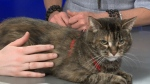 Pet of the week: Lili