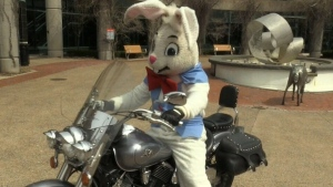 Biker bunny makes rounds in Moncton
