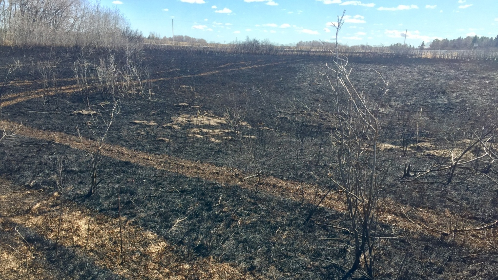 Cranberry Flats to get more wildflowers, bird habitat after grassfire