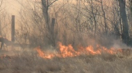 Cranberry Flats scorched in grass fire