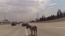 Donkey found wandering on Chicago highway