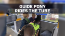 Guide pony