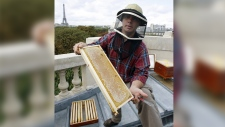 Beekeeper Nicolas Geant, seen here harvesting honey from beehives on the roof of the Grand Palais, on September 2, 2009, also looks after the Notre Dame hives atop a sacristry adjoining the cathedral. (PATRICK KOVARIK / AFP)