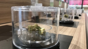 Regina pot-shop owners celebrated the first legal 4-20 on April 20, 2019.