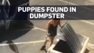 Woman wanted after bag of puppies found in dumpste
