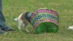Puppy Easter Egg Hunt