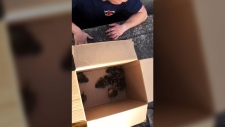 Firefighters rescue ducklings from storm drain