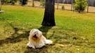 Benji enjoying the weather. Photo by Nadine Hart.