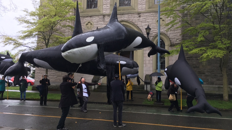 Celebrants carry inflatable orcas outside the wedding of Elizabeth May and John Kidder at Christ Church Cathedral in Victoria on April 22, 2019. (CTV Vancouver Island)