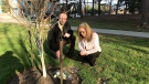 Roula Massin and Rob Little visit a memorial tree planted in honour of an 80-year-old who died in the van attack on the one-year anniversary of the tragedy. (Danny Pinto/CTV News Toronto)