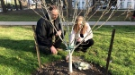 Roula Massin and Rob Little visit the memorial tree planted in honour of an elderly victim of the North York van attack. (Danny Pinto/CTV News Toronto)