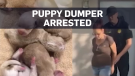 Woman arrested in Cali. puppy dumping case