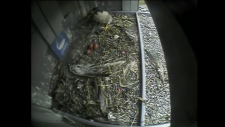 Three eggs seen on the Falcon Cam