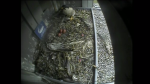 Peregrine parents trade seats on 3 eggs
