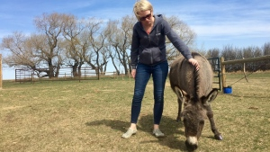 Joni Straker and her pet donkey, Bella. (Laura Woodward/CTV Saskatoon)