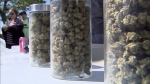Legalization fails to curb black market pot
