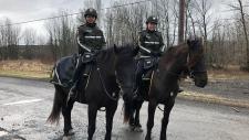 mounted surete du quebec, horses