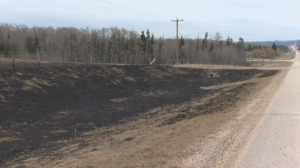 Burn marks from a grass fire in Lacombe County.