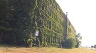 CTV Windsor: Walker Power building discoveries