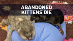 Newborn kittens left in dumpster die: B.C. SPCA
