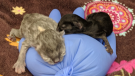 Newborn kittens left in dumpster die: B.C. SPCA