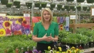 Gardener's April 25