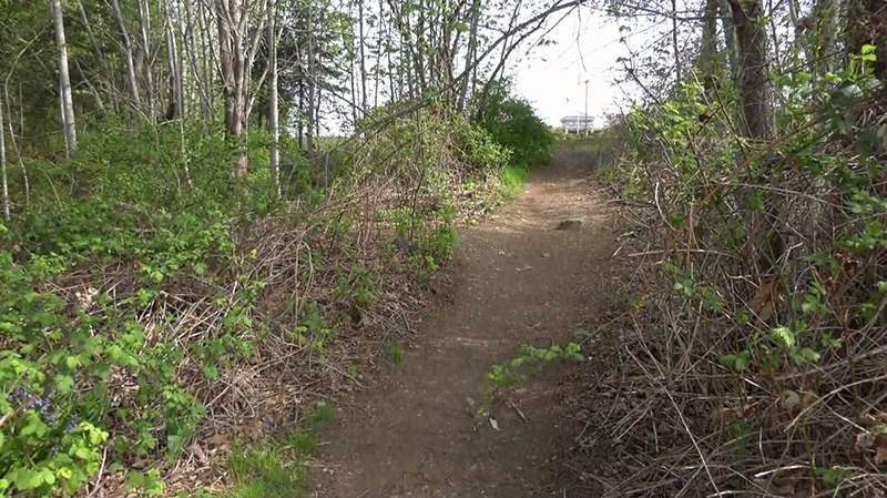 A trail near Valley View Drive where a Grade 10 girl was assaulted by a group of teens, according to RCMP, is shown. April 25, 2019. (CTV Vancouver Island)