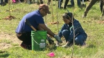 CTV Windsor: Concerns over tree program cuts