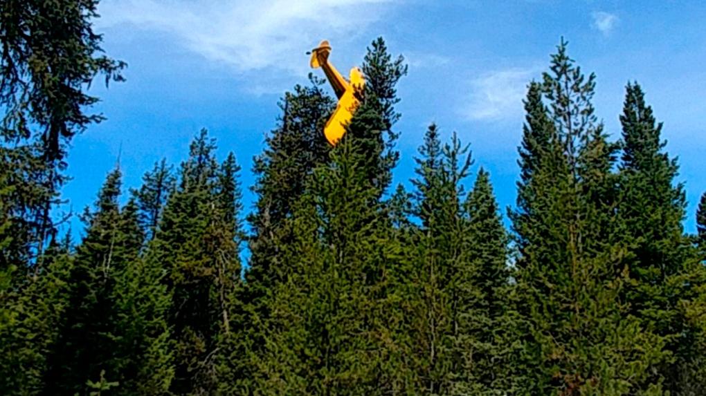 Pilot rescued after plane crash-lands on giant fir tree