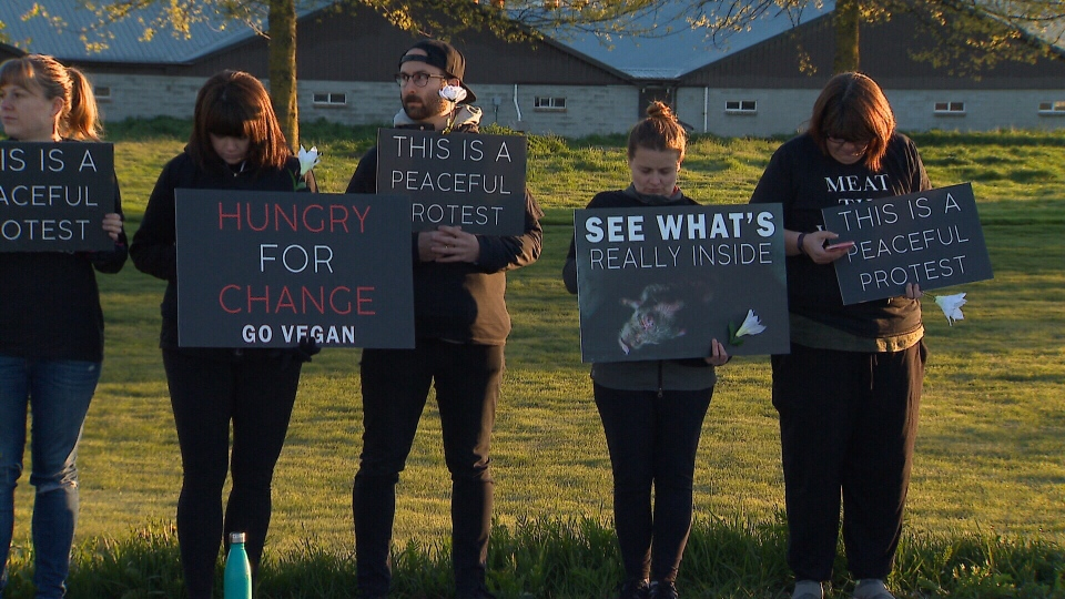 "The protesters said they are calling for an end to the animal agriculture industry entirely, and their message is ""animals are here with us, not for us."" (CTV)"
