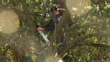 cougar rescue Victoria