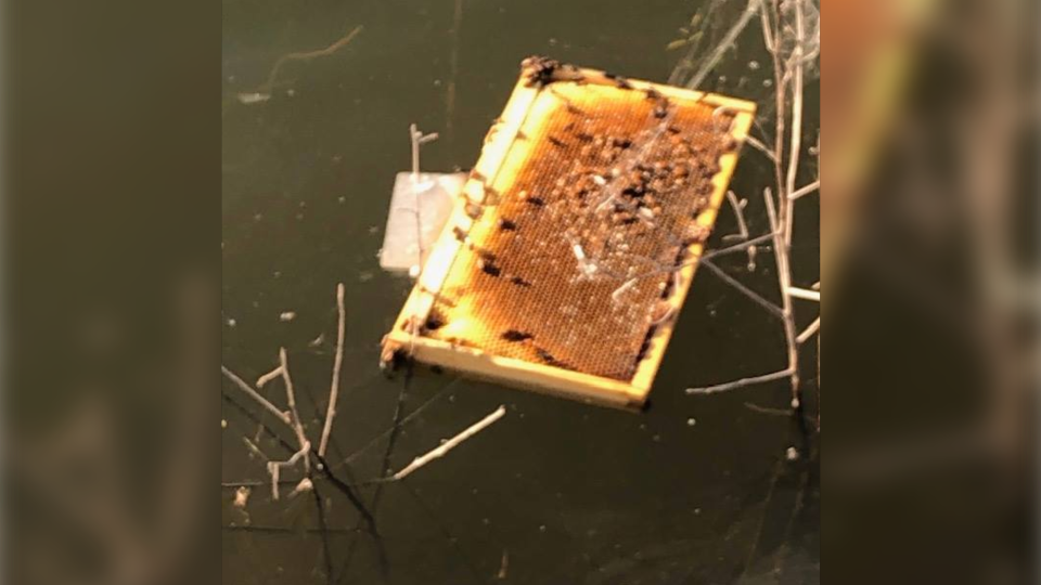 An arsonist in Texas set dozens of beehives on fire and threw some in a pond. (Facebook/Brazoria County Beekeepers Association)