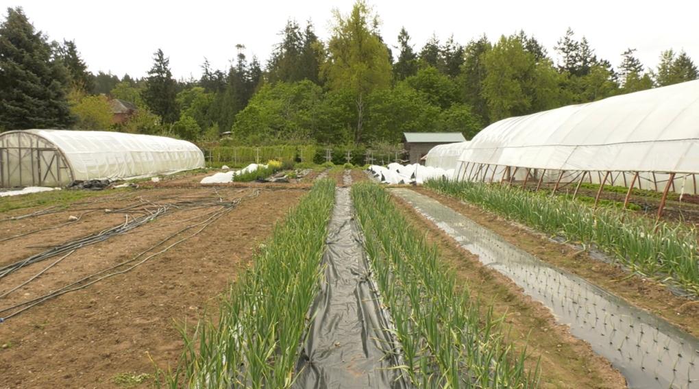 Capital region looks to municipalities to establish a regional 'food land trust'