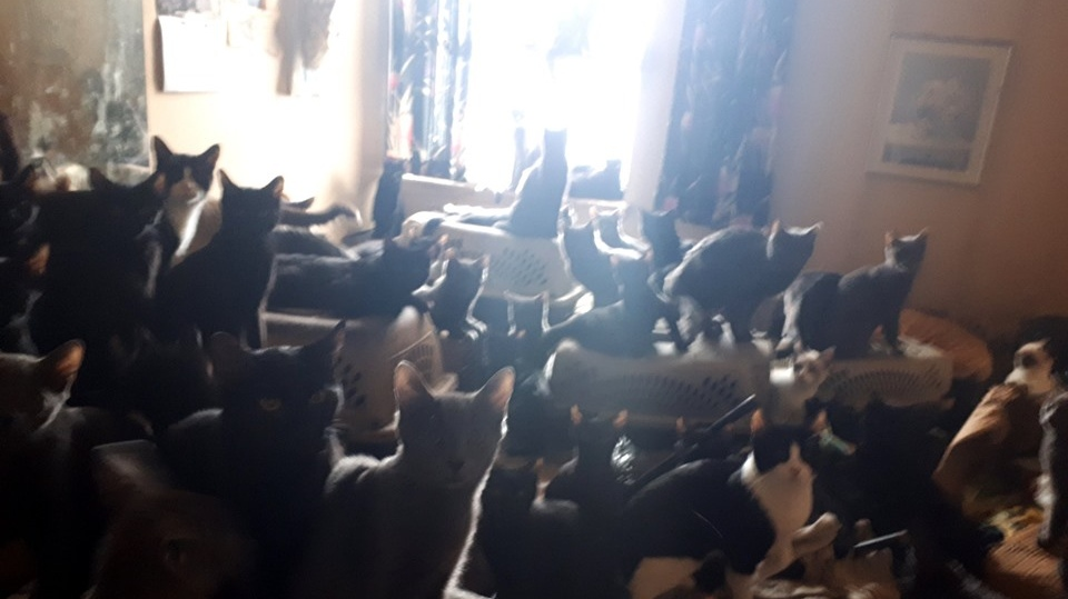 More than 300 cats were found inside a Toronto, Ont. apartment. (Toronto Cat Rescue/ Facebook)