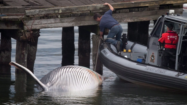 Fin whale dies near Vancouver