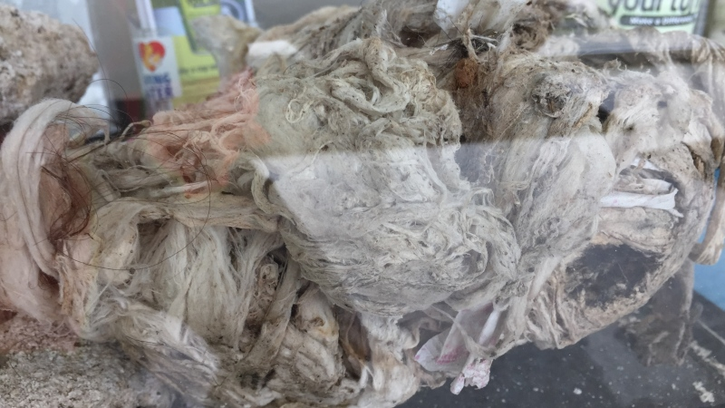 'Flushable' wipes are seen on display in London, Ont. on Monday, May 6, 2019. (Bryan Bicknell / CTV London)