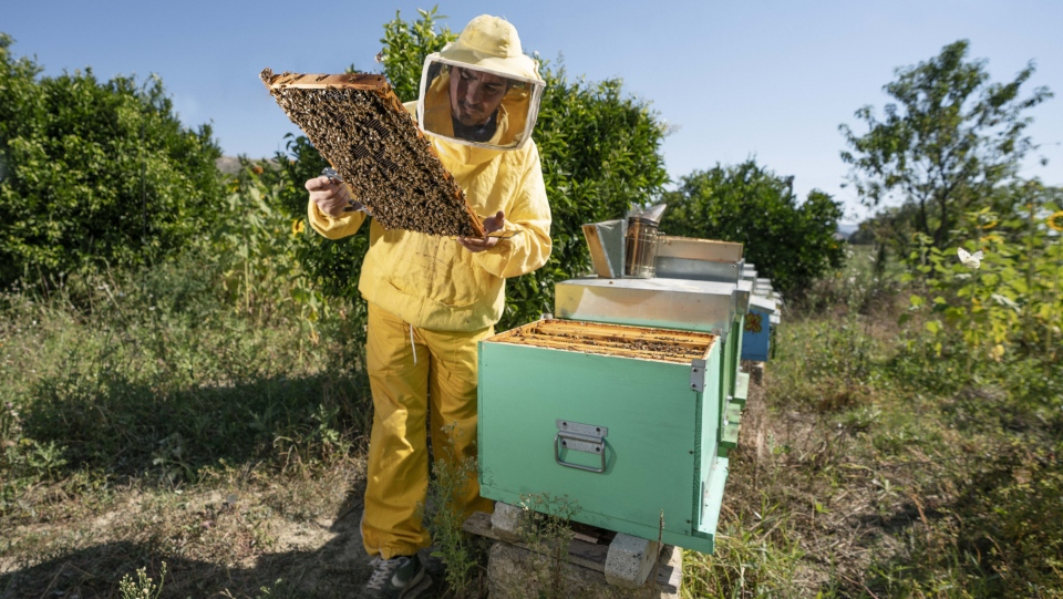Five volunteers chosen by Airbnb will learn bee keeping while living like locals in the village of Grottole, Italy, this summer. (Airbnb)