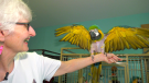 Dozens of parrots are available for adoption at the Greyhaven Exotic Bird Sanctuary in Delta.