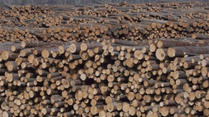 Softwood lumber is pictured at Tolko Industries