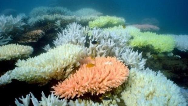 hawaii super coral