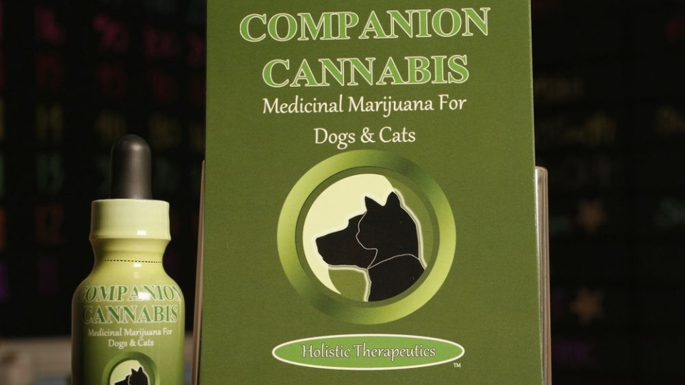 In this photo taken Thursday, May 30, 2013, Companion Cannabis, by Holistic Therapeutics, a Marijuana medicinal tincture for dogs and cats is seen at La Brea Compassionate Caregivers, a medical marijuana dispensary in Los Angeles Thursday, May 30, 2013. Damian Dovarganes / THE ASSOCIATED PRESS