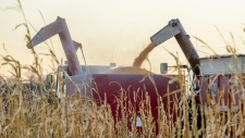 An auger delivers corn seed onto a wagon