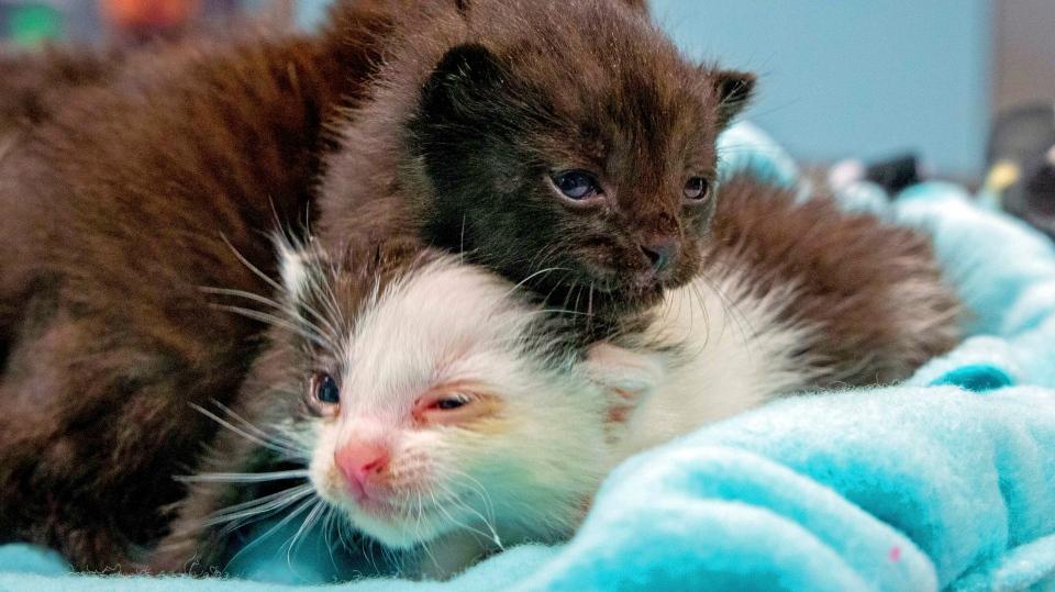 Kitten stowaways found after long journey in steel column