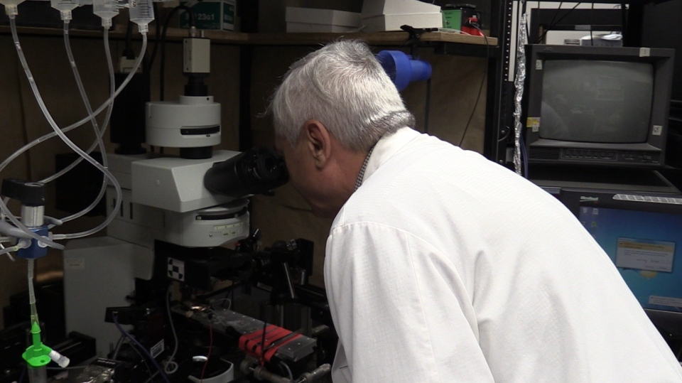 Dr. Michael Poulter works at his lab at Western University's Schulich School of Medicine and Dentistry in London, Ont. on Thursday, May 16, 2019. (Celine Moreau / CTV London)