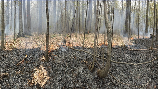 The Simcoe County Forestry Department conducts a controlled burn in a forested area in Adjala-Tosorontio on Thurs., May 16, 2019 (CTV News/Roger Klein)