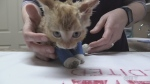 A five-week old kitten was found by firefighters in Sudbury a day after a garage fire. Ian Campbell reports.