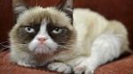 In this undated photo provided by Nestle Purina PetCare is Grumpy Cat. (AP Photo/Nestle Purina PetCare)