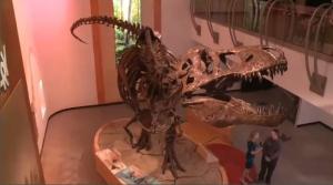 Largest T.rex